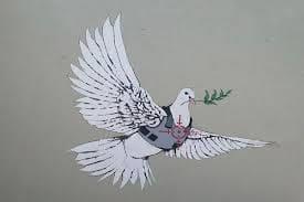 armoured dove